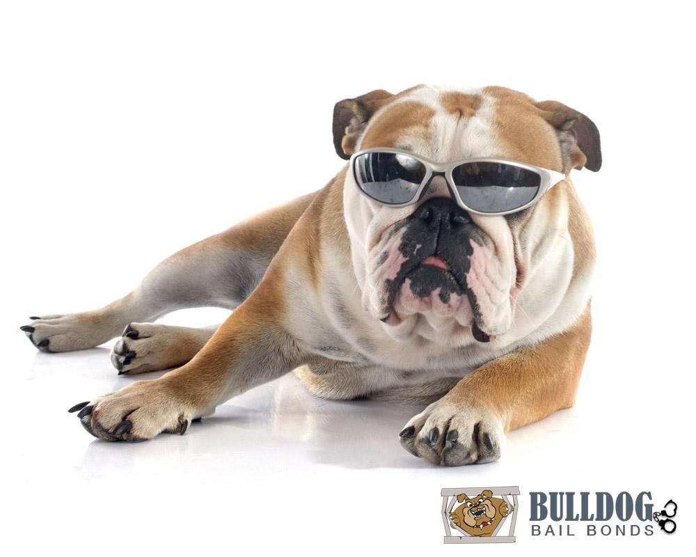 Bulldog Bail Bonds