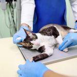Felony Animal Cruelty in California