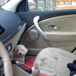 Leaving Pets in Hot Cars in California